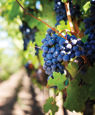 Kelowna-Wine-Vineyard-Tour