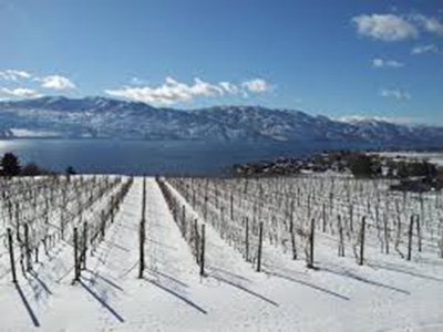 Winter-Wine-Tours